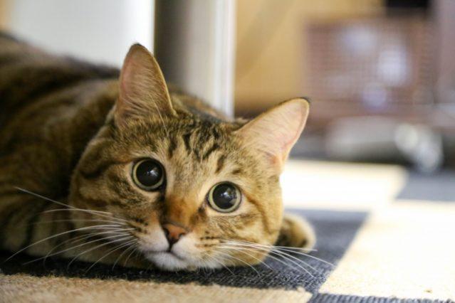 英語 エロい 表現 猫